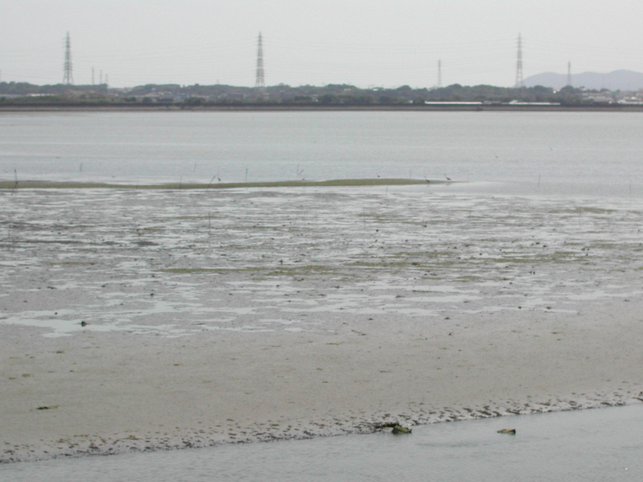 干潟の風景