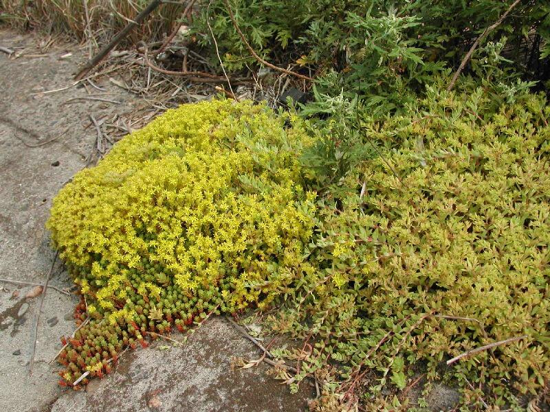 埋立地の花