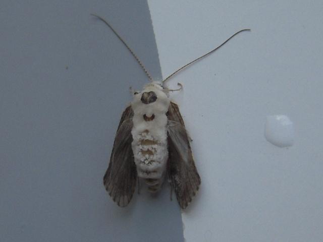 不明の昆虫