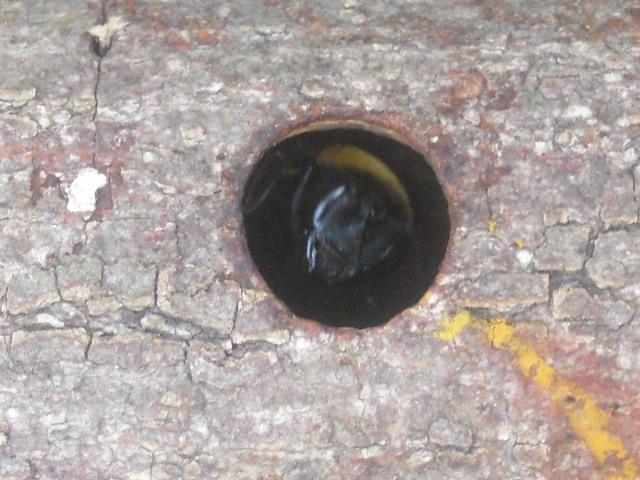 穴の中のハチ